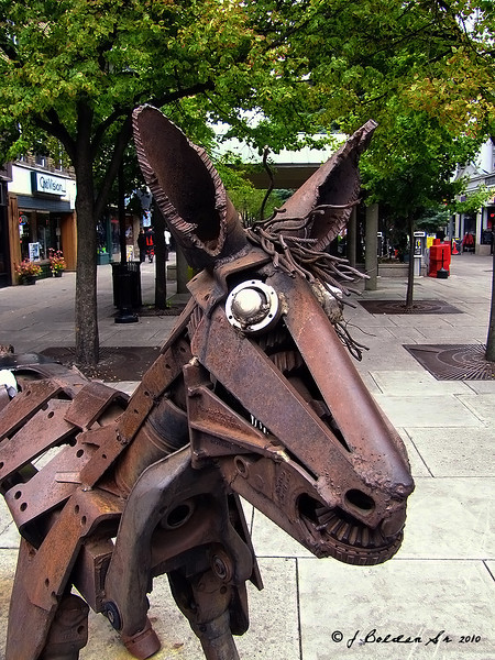 IMAGE: http://graphyfotoz.smugmug.com/Main-Gallery-page/Miscellaneous/Other-shots/Horse-Head-Portrait-1/997745876_yTAN6-L.jpg